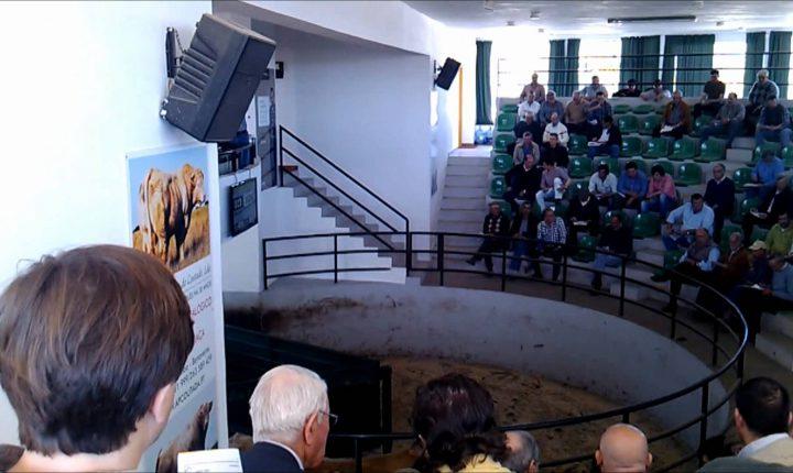 Évora: Associação de agricultores constrói novo parque de leilões