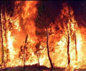 GNR detém suspeito de incêndio florestal em Moura