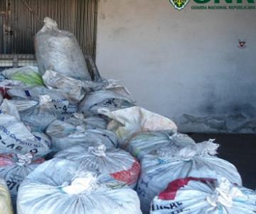 Alvito: 6 detidos por furto de 1 tonelada de azeitona