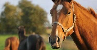 Évora acolhe formação avançada sobre medicina para cavalos
