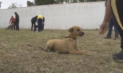 """Évora: Canil municipal """"leva"""" cães à prisão"""