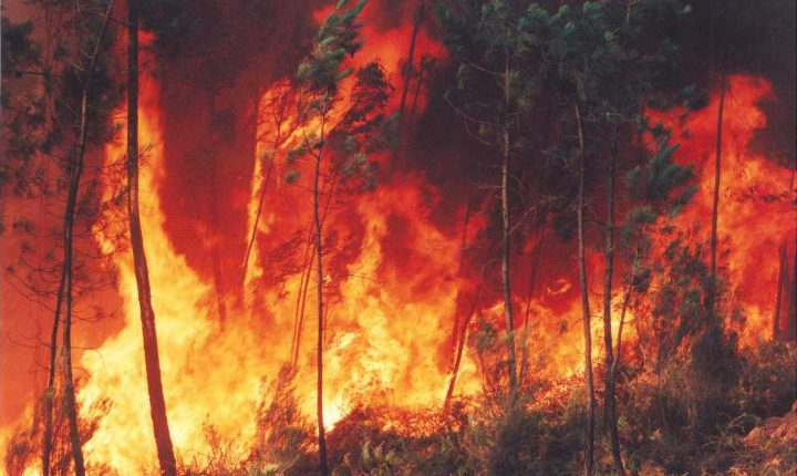 Está dominado o incêndio em Grândola