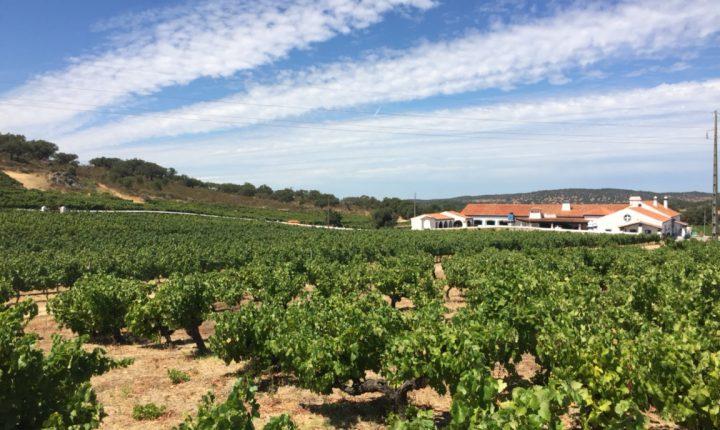Évora: Fundação Eugénio de Almeida compra empresa de vinhos