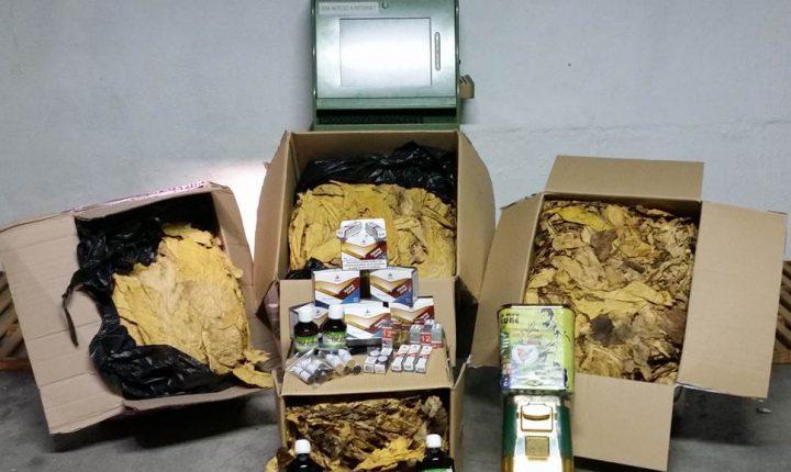 Évora: GNR apreende tabaco suficiente para fazer mais de 80 mil cigarros
