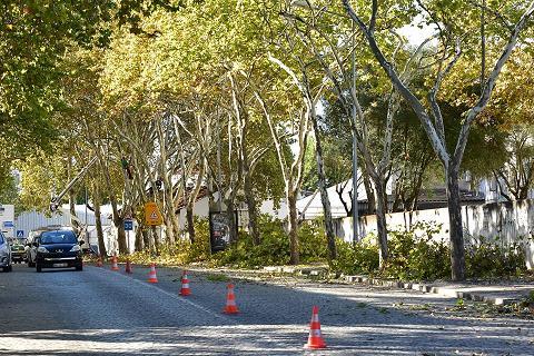Poda e abate de árvores condicionam trânsito em Évora