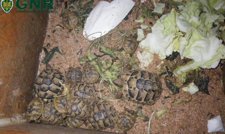 Odemira: GNR apreende tartarugas em herdade
