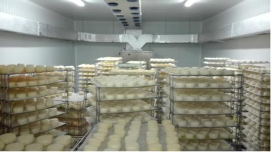 Borba: ASAE apreende 33.000 queijos em Rio de Moinhos