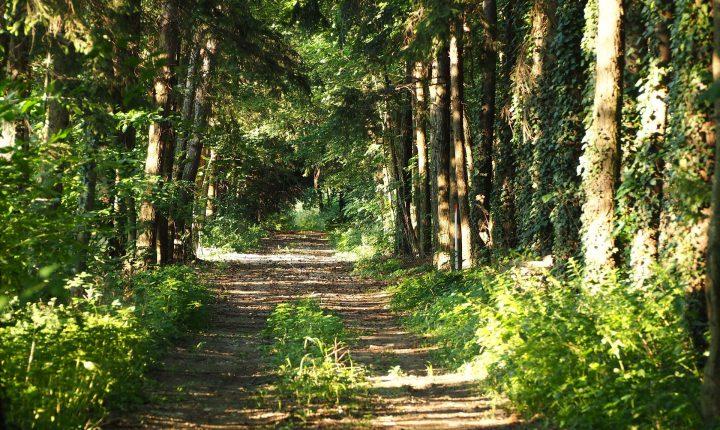 Voluntariado Jovem para Natureza e Florestas em Viana do Alentejo