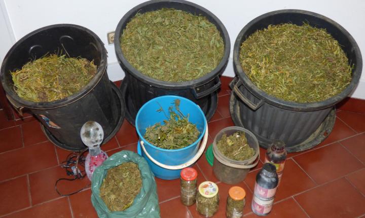 Portalegre: Homem entrega voluntariamente droga que tinha em casa