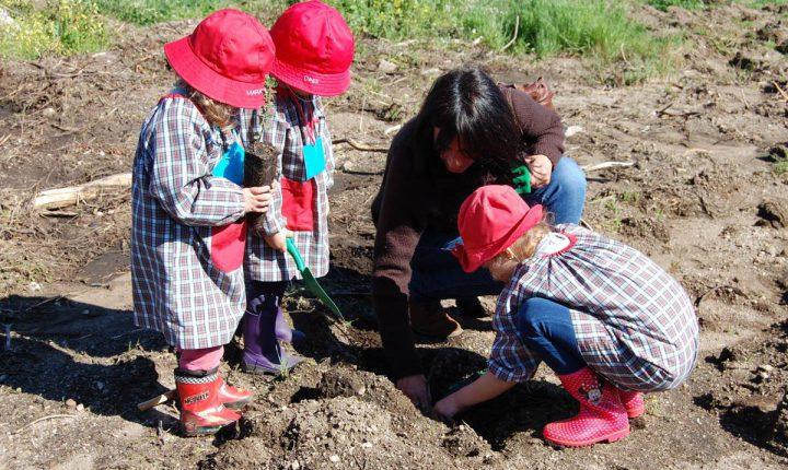 Évora: Plantadas 300 árvores no Alto de S. Bento.