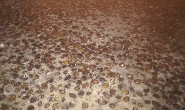 ASAE apreende azeitona de mesa em Reguengos de Monsaraz