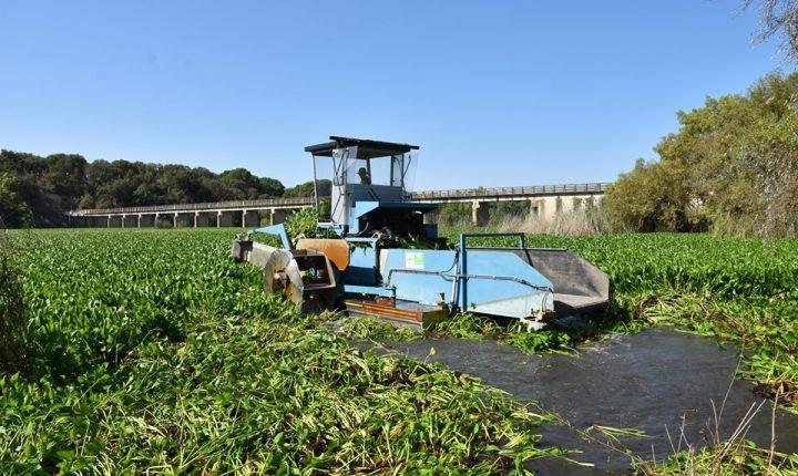 Remoção de jacintos de água avança em Mora