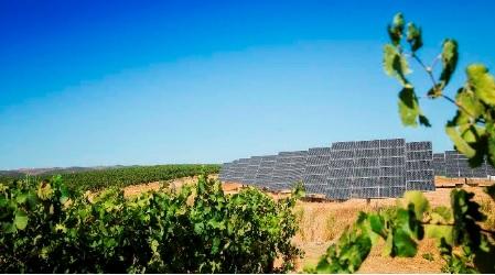 Programa de Sustentabilidade dos Vinhos do Alentejo ganha concurso europeu