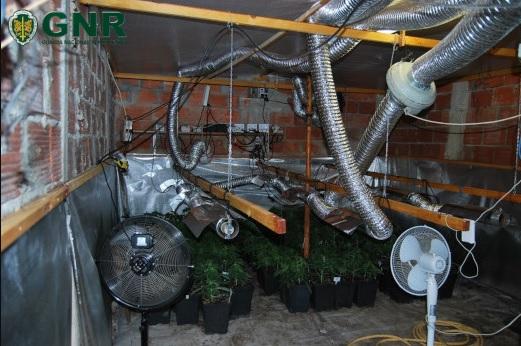 GNR desmantela estufa de canábis subterrânea em Beja