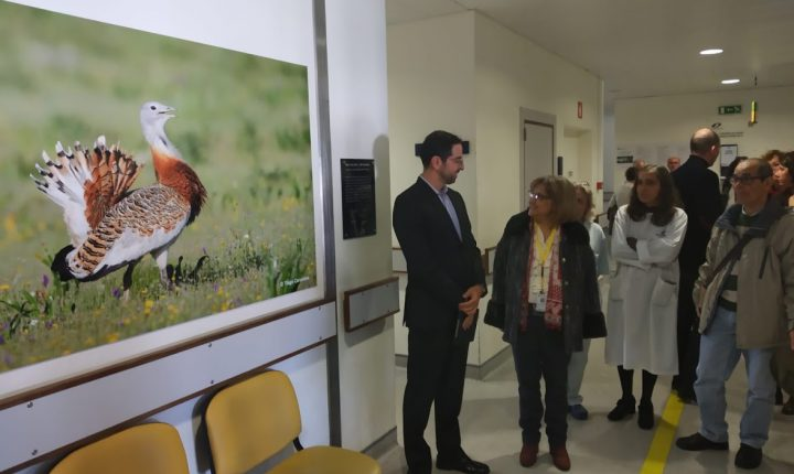 """Consultas externas do hospital de Évora """"ganham nova vida"""" com exposição"""