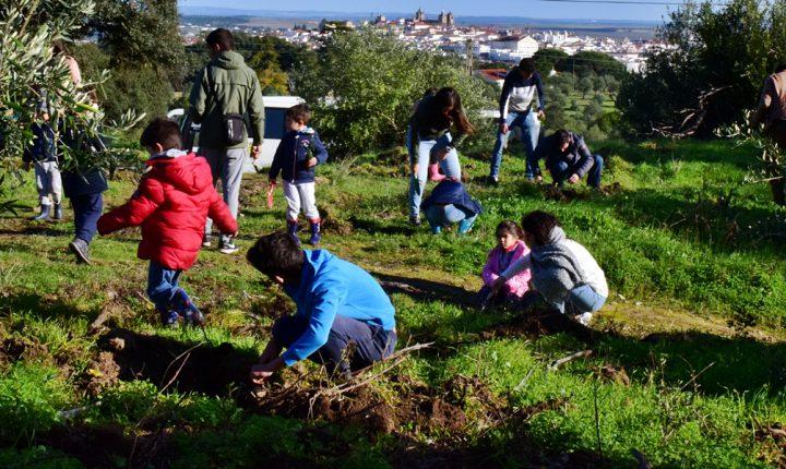 Duas mil árvores estão a ser plantadas no Alto de S. Bento