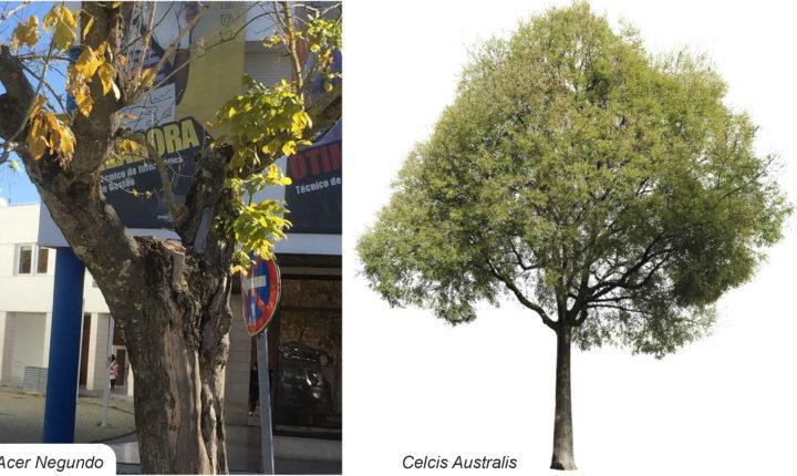 Câmara de Évora abate 11 árvores em risco de queda junto à EPRAL