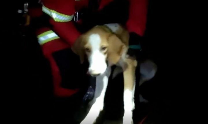 Bombeiros salvam cinco cães caídos em minas na zona de São Brissos