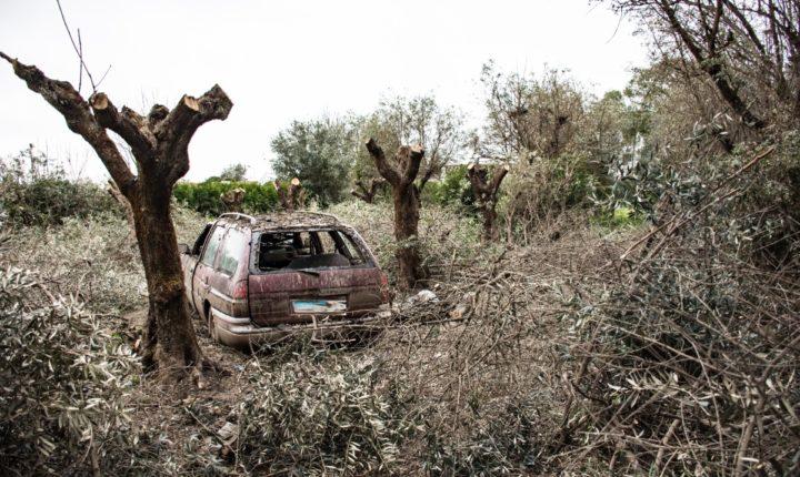 Câmara de Évora faz limpeza coerciva de colónia de garças-boieiras