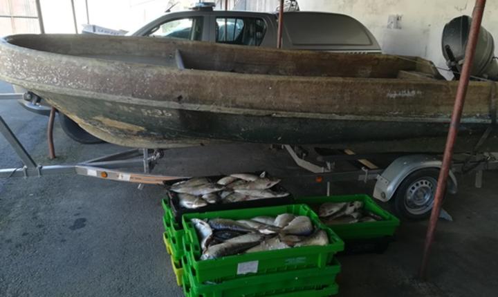 GNR apreende 200 quilos de peixe no Alqueva