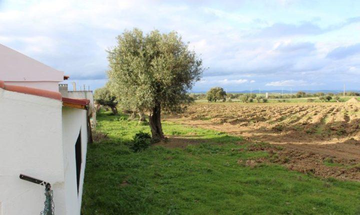 PCP alerta para instalação de culturas intensivas em S. Vicente do Pigeiro