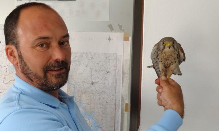 GNR de Évora recupera ave de rapina