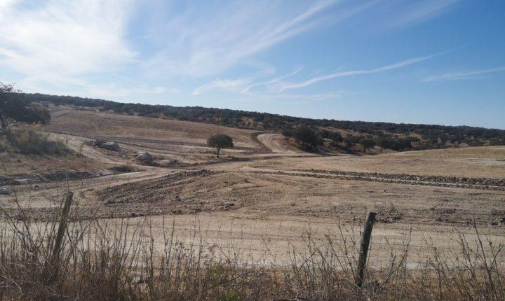 """Anta em Mora """"apagada do mapa"""" durante trabalhos agrícolas"""