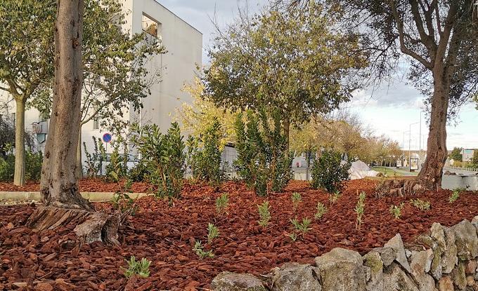 Universidade de Évora desenvolve projeto para criar jardins sustentáveis