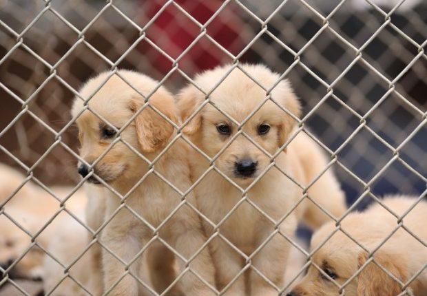 Alentejo conta com 17 projetos de modernização em centros de recolha de animais