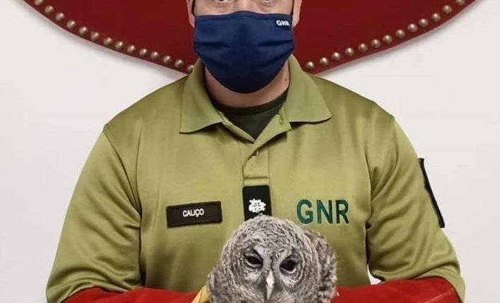 GNR resgata coruja-do-mato juvenil no concelho de Évora