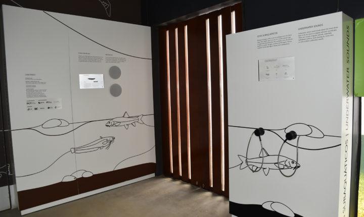 Fluviário inaugura painéis interativos sobre Sons de Peixes