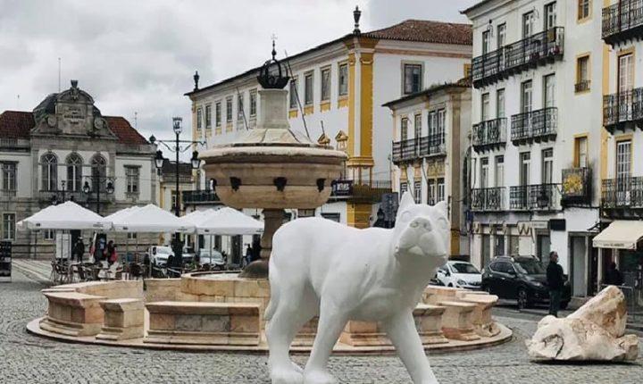 """Exposição """"Like a Dog"""" patente em Évora até 16 de maio"""