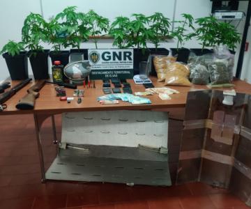 Detido por tráfico de estupefacientes no concelho de Campo Maior