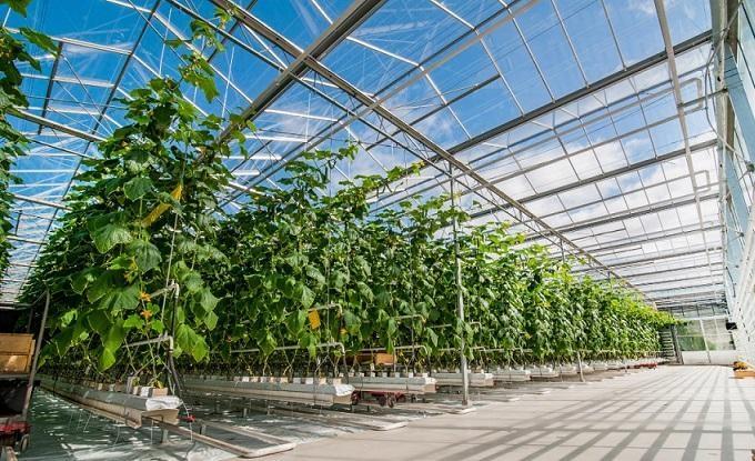 Universidade de Évora aposta na formação especializada de produtores