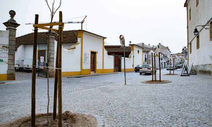 Mais de 500 árvores foram plantadas em Évora