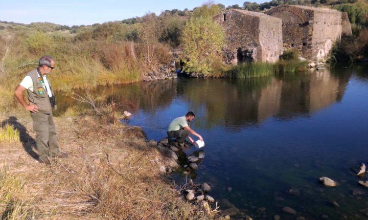 Detetada prática ilegal de pesca na zona de Évora