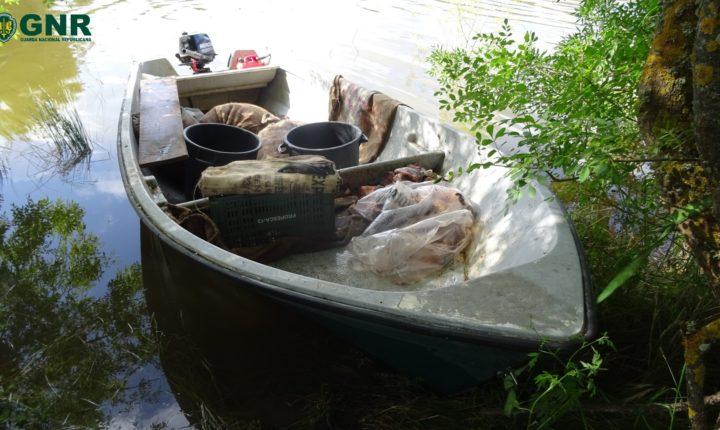 GNR apreende 105 quilos de lagostim vermelho em Ferreira do Alentejo